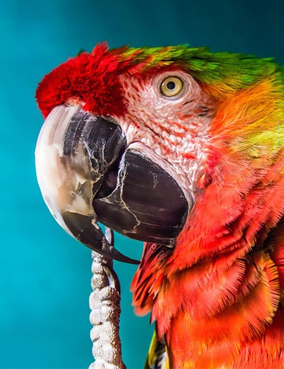 Houder van vogels